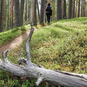 ihminen metsäpolulla
