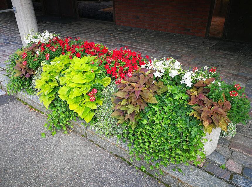 kukkaistutus kaupungintalon edessä