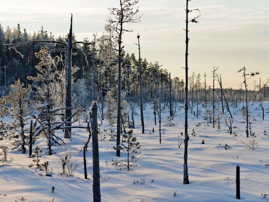 Kelokot_Haapakeitaalla_kuva_Geopark_Terttu_Hermansson
